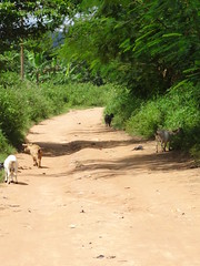 (hanna.ghana2014) Tags: nature village goat ghana sit okaikrom