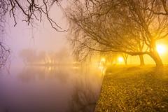 Touching the water (Sorin Mutu) Tags: park lake tree fog night lac le romania parc bucharest bucuresti tineretului