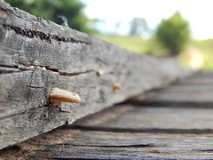 Mushroom - DSCN0722 (Caduuu) Tags: road macro mushroom way nikon estrada sp cogumelo marlia