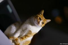 _Q9R6723-0 (Dream Deliver) Tags: car night cat bokeh