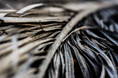Textures... (Fe_Lima) Tags: leaf bush nikon textures tones d7100 nikon50mm18g nikonafsnikkor50mmf18g nikond7100 nikonf18g