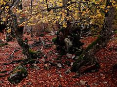 El Bosque (Jesus_l) Tags: espaa europa segovia jessl hayedolapedrosa