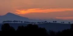 In fila indiana (luporosso) Tags: trees naturaleza tree nature silhouette alberi sunrise nikon alba natura albero naturalmente nikond300s