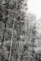 hidden lamp (crodriguesc) Tags: wood autumn trees light bw white black tree art film nature lamp monochrome analog 35mm outside photography grey lights austria lampe licht blackwhite wooden sterreich woods nikon fotografie steel kunst herbst natur grau struktur structure symmetry hidden sw monochrom agfa 35 laterne holz wald weiss bume nikonfe apx baum schwarz innsbruck bwphotography baeume draussen stahl oesterreich versteckt filmphotography symmetrie nikonfilm filmfotografie filmfotgrafie