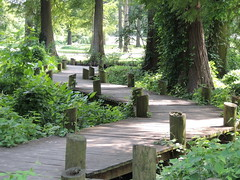 Reel Foot Lake in Missouri (belleraiser) Tags: bayou missouri cypresstrees woodenwalkway reelfootlake curvedpath