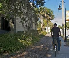 Lovely Spanish Moss (METROFIETS) Tags: beach bike bicycle florida bikes sarasota beachbike cargobike beachcruiser enjoytheride bikelife metrofiets keepriding bikesrq palmtreesandbikes