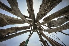 Tee-pee (teresakwealleans) Tags: newzealand summer holiday beach driftwood teepee opotiki