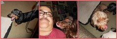 Post-Class Reunion (Tobyotter) Tags: tongue frank fdsflickrtoys mosaic tony dachshund perro link teckel owner jimmydean