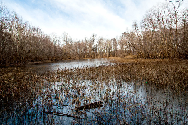 Eagle Slough Nature Preserve - January 5, 2015