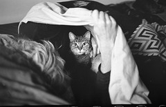 Francine looking from under the covers L_M6_8833 (erlin1) Tags: blackandwhite usa film analog december kodak journal minneapolis visible tmax400 mn v1 leicam6 2014