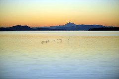 THE CARESS OF WINGTIPS  -  (Selected by GETTY IMAGES) (DESPITE STRAIGHT LINES) Tags: sea mountain canada wet water birds silhouette sunrise island dawn islands coast fly geese am wings nikon flickr waves bc britishcolumbia tide flight silhouettes wave goose vancouverisland coastline washingtonstate tidal sidney mountbaker canadageese goldenhour mtbaker skein d800 firstlight thegoldenhour paulwilliams lowlightphotography sidneybritishcolumbia sidneybc kulshan nikon70200mm komakulshan nikkor70200mm sidneybythesea nikond800 mountbakerusa despitestraightlines mtbakerusa mountbakerwashingtonstate ilobsterit askeinofgeese
