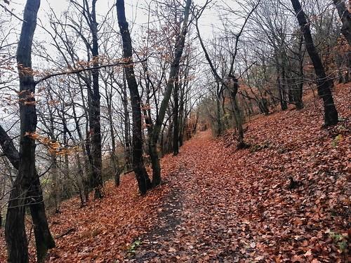 Přírodní památka Vinice