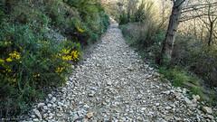 2064  Camino de piedras (Ricard Gabarrs) Tags: camino carretera natura olympus bosque sendero piedras piedra montrebei airelibre ricgaba ricardgabarrus