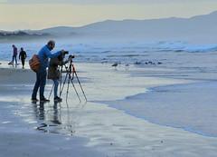 DSC_2732 (Eleu Tabares) Tags: ocean california sea bird beach water photographer wave pismo
