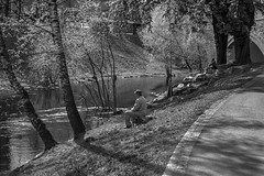 Springtime By The Stream (bjorbrei) Tags: park trees water oslo norway river spring stream calm trunks tranquil pathway springtime akerselva