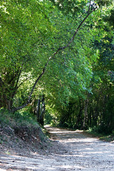 (tatianatorgonskaya) Tags: wood tree green balkans montenegro  bokakotorska crnagora    montenegrin   bokabay  balkanstravel