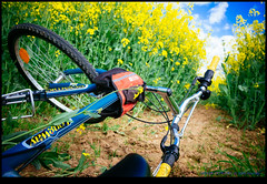 160428-7774-XM1.jpg (hopeless128) Tags: sky france bicycle clouds eurotrip fr rapeseed 2016 nanteuilenvalle aquitainelimousinpoitoucharentes aquitainelimousinpoitoucharen