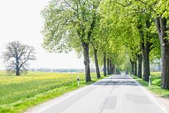 (lotl.axo) Tags: street trees plants green nature germany landscape deutschland spring alley natur pflanzen driveway grn landschaft bume frhling allee mecklenburgvorpommern ruralarea travelphotography reisefotografie strase rurallandscape mecklenburgischeseenplatte fahrweg lndlicherraum