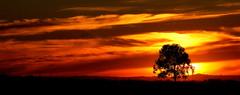 Campo e luz (Eduardo Amorim) Tags: sunset brazil southamerica brasil atardecer tramonto sonnenuntergang pôrdosol pelotas riograndedosul pampa poniente anoitecer coucherdesoleil campanha brésil entardecer crepúsculo américadosul poente amériquedusud sudamérica suramérica américadelsur südamerika costadoce americadelsud americameridionale eduardoamorim