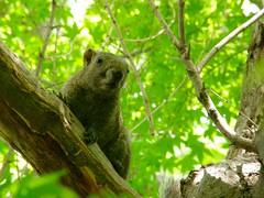 squirrel (hamapenguin) Tags: animal squirrel
