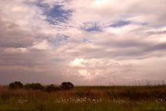 approaching storm (tom bourdot) Tags: light storm nature june clouds outside spring nj gimp wetlands marsh nikkor forsythe refuge approachingstorm forsytherefuge nikond3300