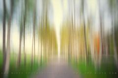 avenue de printemps (pixiespark) Tags: munich mnchen spring alley pastels birches icm frhling allee birken pastelle intentionalcameramovement avenuedeprintemps