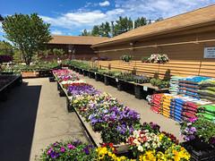 Planting Time (votsek) Tags: us unitedstates newhampshire nashua 2016