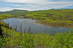 Flooded Little Fox Creek (MIKOFOX  Catching Up!) Tags: canada water landscape spring may yukon aspen spruce beavers beaverpond xt1 foxlakeburn littlefoxcreek fujifilmxt1 xf18135mmf3556rlmoiswr mikofox
