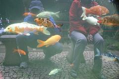 Underwater world (Dieter Drescher) Tags: world blue red people rot yellow aquarium underwater gelb mysterious koi carp persons blau underwaterworld personen welt unterwasser karpfen koicarp unterwasserwelt geheimnisvoll koikarpfen dieterdrescher