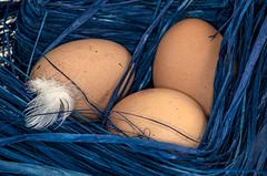 D3231-Huevos a buen recaudo (Eduardo Arias Rbanos) Tags: nikon nest feather compositions huevos eggs pluma nido composiciones d300 ritmos rhytms eduardoarias eduardoariasrbanos