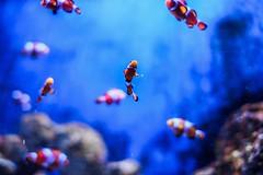 Found nemo! (whitakermark81) Tags: sea fish nemo clown
