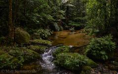 Mount Lewis (Mattsummerville) Tags: rainforest mountlewis jullaten