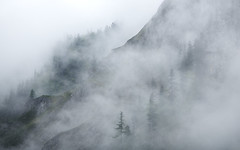 gracious goes the ghost of you (STEPtheWOLF) Tags: morning white mist tree texture rock fog canon austria woods day outdoor daybreak styria 135l seewiesen mountein 5d3