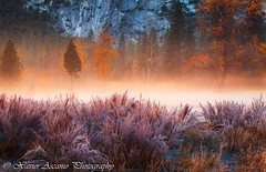 Frosty Morning Mist (Xavier Ascanio) Tags: california ca morning autumn trees orange mist mountains color fall grass landscape photography nationalpark frost meadow foliage yosemite sentinelmeadow