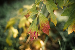 """Autumn • <a style=""""font-size:0.8em;"""" href=""""http://www.flickr.com/photos/92529237@N02/15532617489/"""" target=""""_blank"""">View on Flickr</a>"""