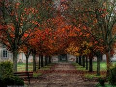 Alle des couleurs (Jrme Delahaye) Tags: automne olympus zuiko em1 1260swd alledescouleurs