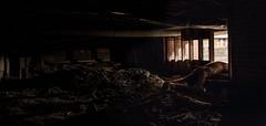 #345 Beneath (MXLVIII) (photoshepherd) Tags: portrait art abandoned canon nude underground artistic spiders under surreal panoramic explore urbanexploration gross 5d underneath conceptual cinematic f4 nope urbex 24105 markiii explorebc nopenopenope fuckingnope