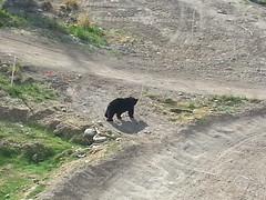 Bear under lift