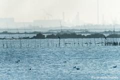 Pialassa della Baiona brackish lagoon (Ciminus) Tags: fog landscape nebbia naturesubjects pialassadellabaiona afsnikkor80400vr brackishlagoon