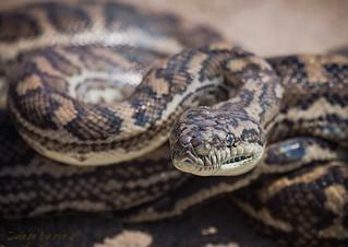 Perfect Python