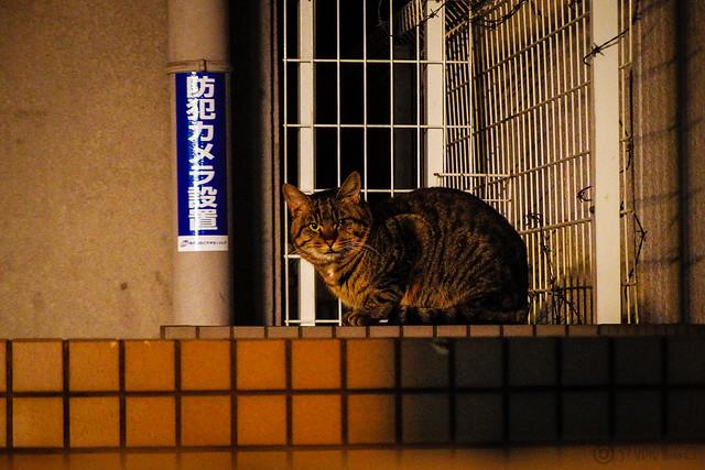 Today's Cat@2015-01-23