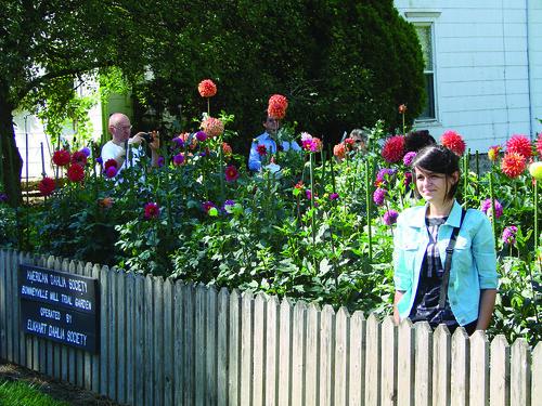 Dahlia Garden -