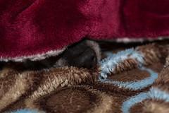dog warm blanket cy365
