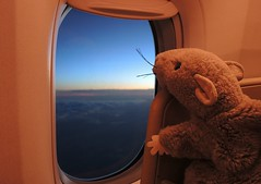 A tired rat heads for home (dw*c) Tags: trip travel plane toy toys nikon rat rats planes picmonkey