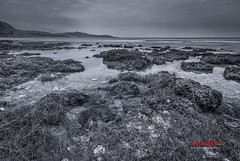 Tidal Pools in WInter ( SUNRISE@DAWN photography) Tags: winter blackandwhite seascape beach monochrome grass coral landscape coast weed gloomy gray vegetation   tidalpool coralreef leaden     logoon