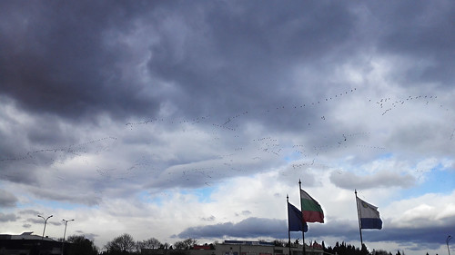 migratory birds, Burgas, Bulgaria / перелетные птицы, Бургас, Болгария