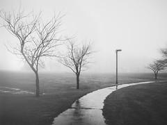 Wolfe Park (Jack Wassell) Tags: trees winter blackandwhite bw mist storm cold tree rain weather fog canon haze path connecticut newengland ct minimal walkway minimalism pathway vsco vscofilm jackwassell