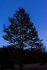 Parque Natural del Alto Tajo (Álvaro García Fuentes) Tags: españa noche nikon guadalajara el estrellas campo soledad monte nocturnas tajo 2014 albergue campamentos orea autillo alvarogarcia parquedelaltotajo