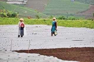 dieng plateau - java - indonesie 24