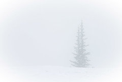 Minimalism I (Mt. Rainier Pine) (Ursa Davis) Tags: west photography photo washington pacific northwest portait united north photograph actress states hip davis ursa timeincown